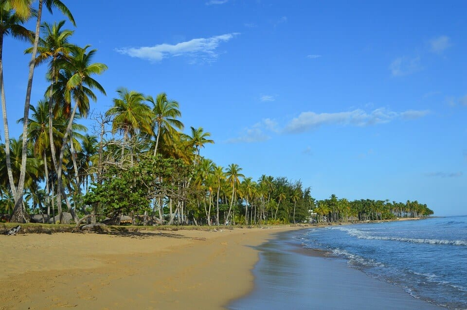 Palm trees on a sandy beach in las terrenas, dominican republic. the blue sea is calm and there are a few scattered white clouds in the light blue sky