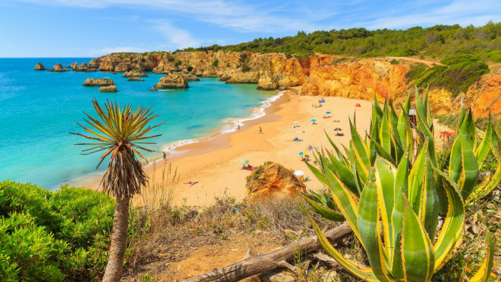 beach at the algarve with cactus in the foreground and turquoise waters and rocks in the background