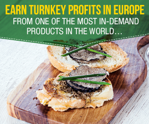 turnkey profits in europe